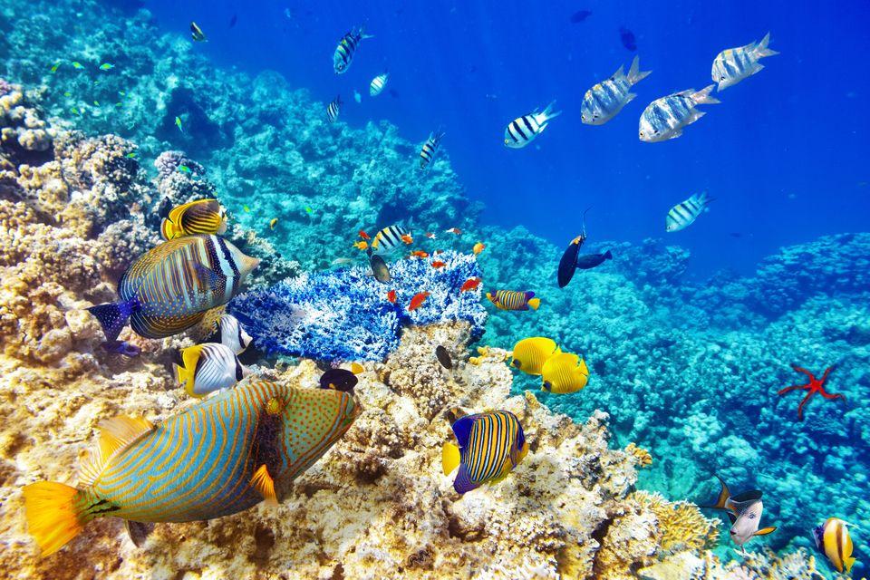 Дайвинг - Увлекательный подводный мир