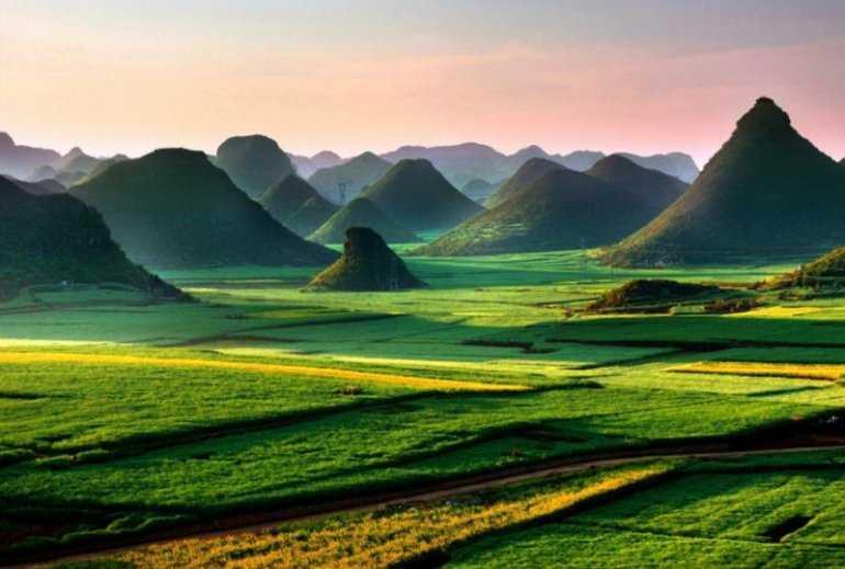 Рапсовые поля Китая