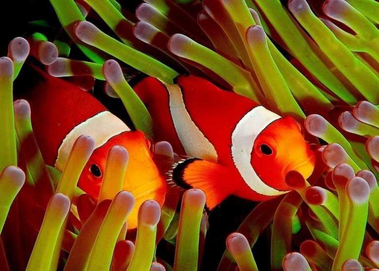 Дайвинг: Увлекательный подводный мир