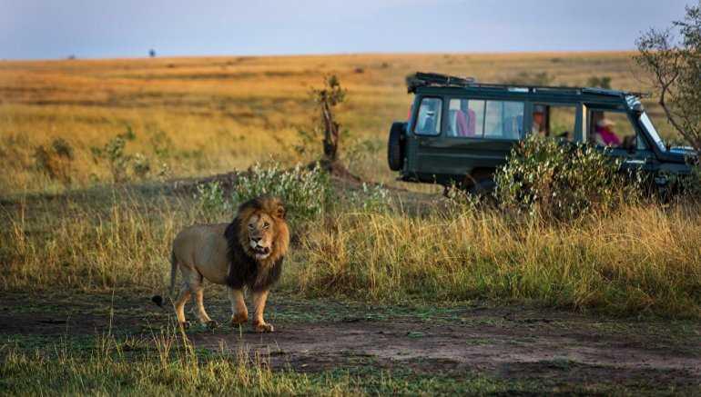 Турист во время сафари по Африке попробовал погладить льва и чуть не потерял руку