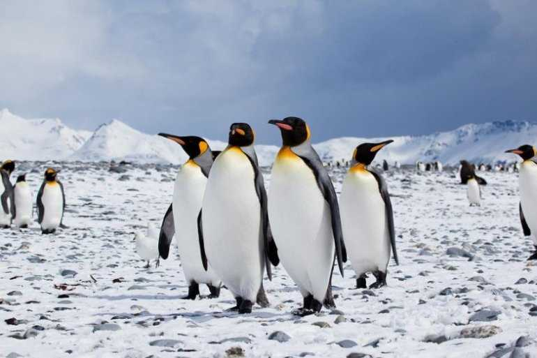 Чуть-чуть об Антарктиде