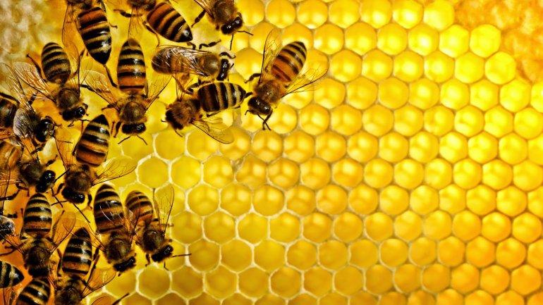 Учеными раскрыт секрет антибактериального свойства меда
