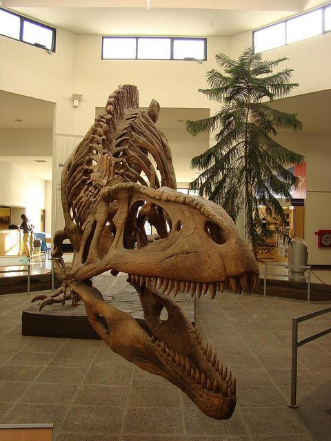 ПалеонтологическиймузейЭджидиоФерульо