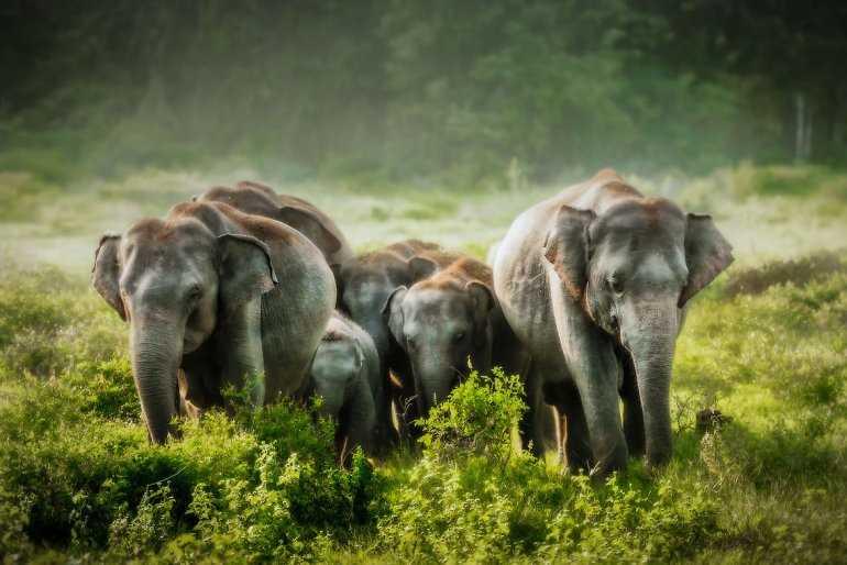 Чай со слоном - что вы о нём знаете?