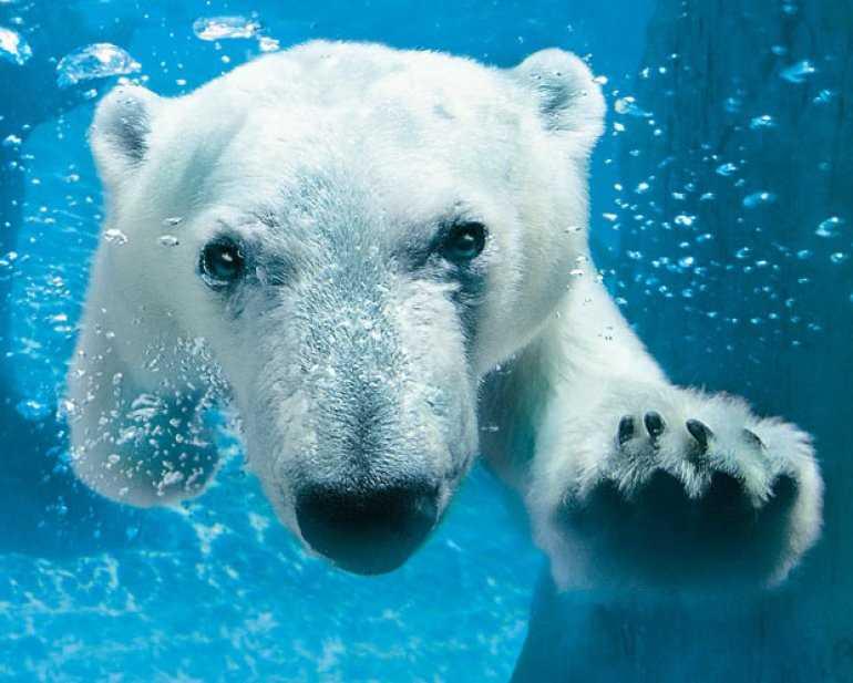 Что арктический туризм в России, может предложить вам?