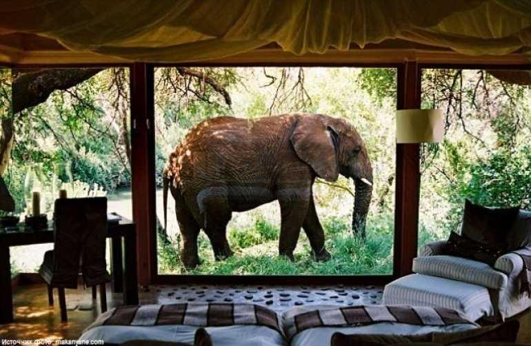 Перейти к записи Экзотика Африки отель Лодж