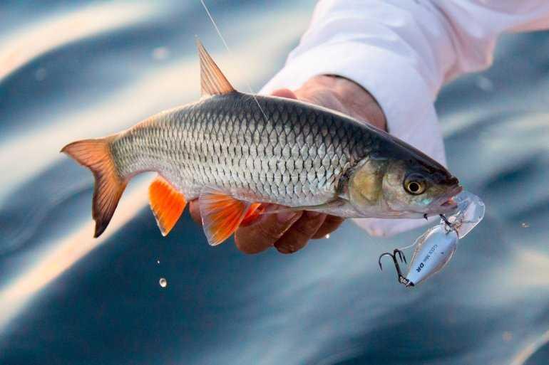 Рыболовные туры по России - несколько простых шагов к рыбацкому счастью