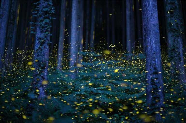 Почему стоит увидеть японский фестиваль светлячков