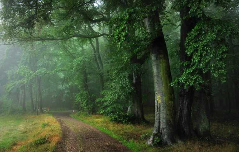 Загадочный Шварцвальд — черный лес Германии
