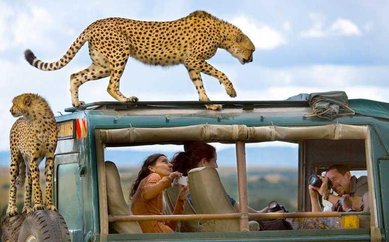 Сафари в Кении: открывая горизонты