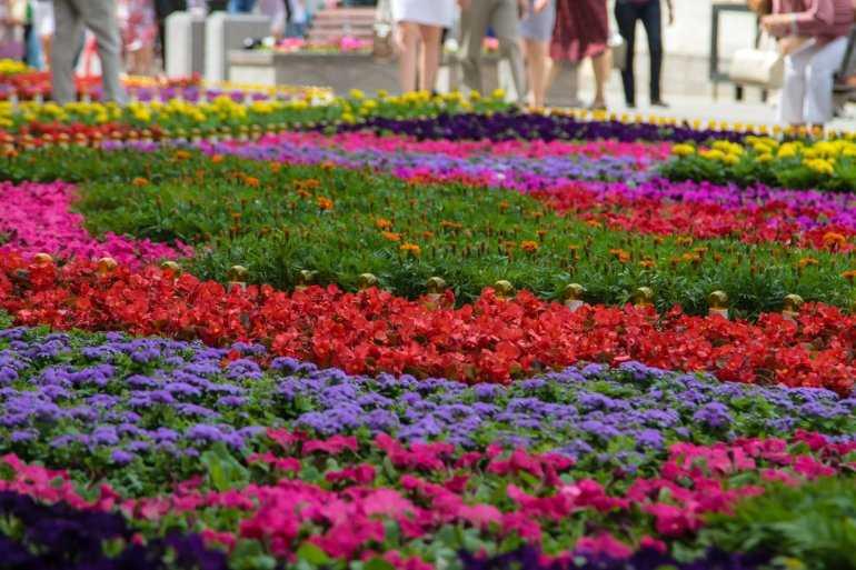Город Жирона - цвета цветочного фестиваля