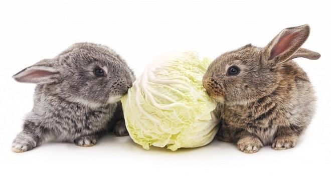 Капуста белокочанная с кроликом