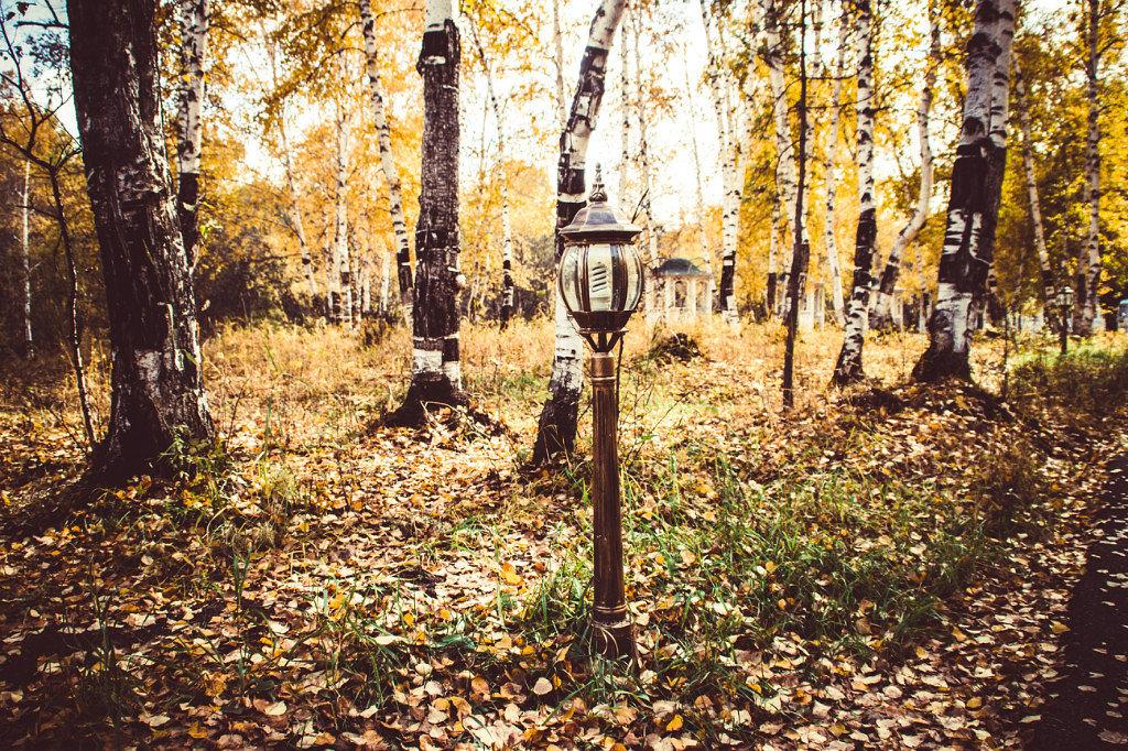 Фонарь в лесу