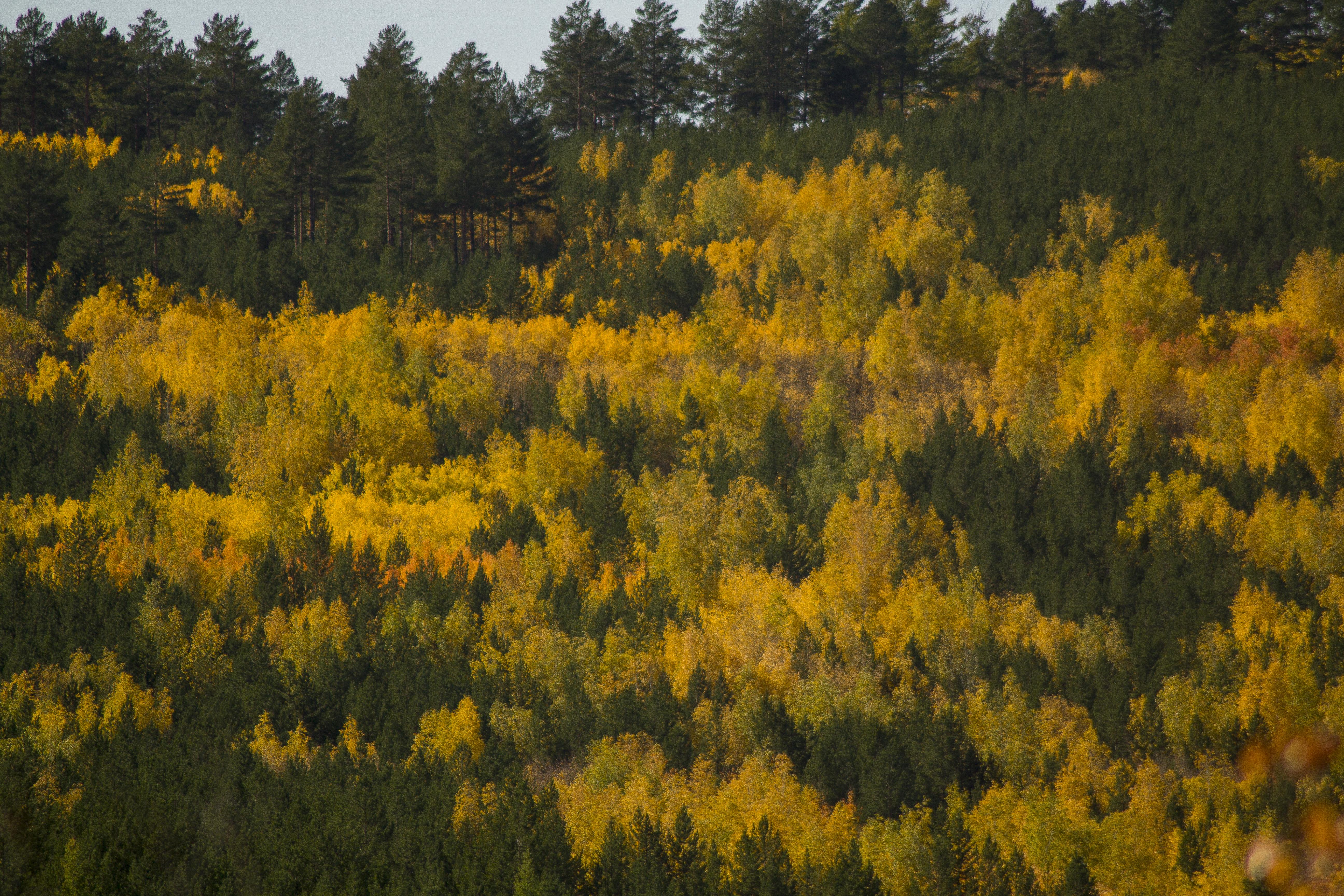 Осень посыпает лес корицей и золотом