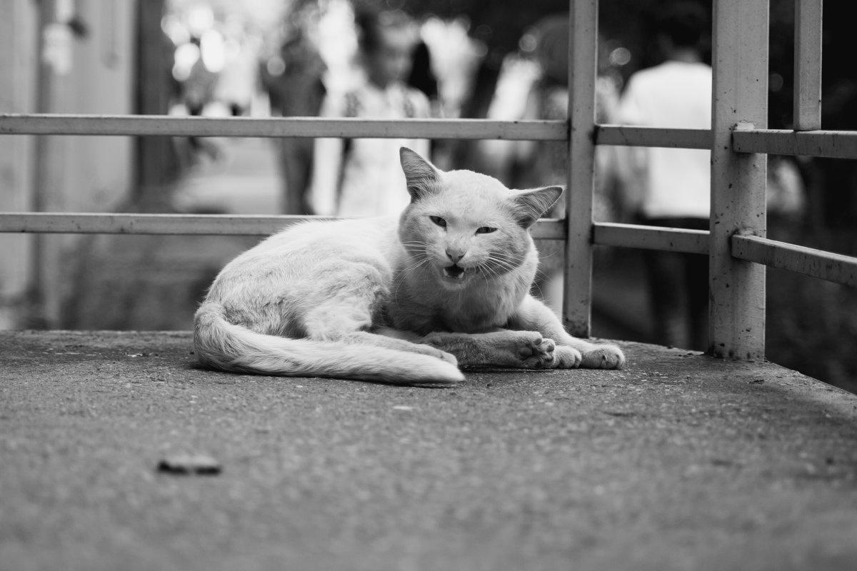 Кот - бродяга