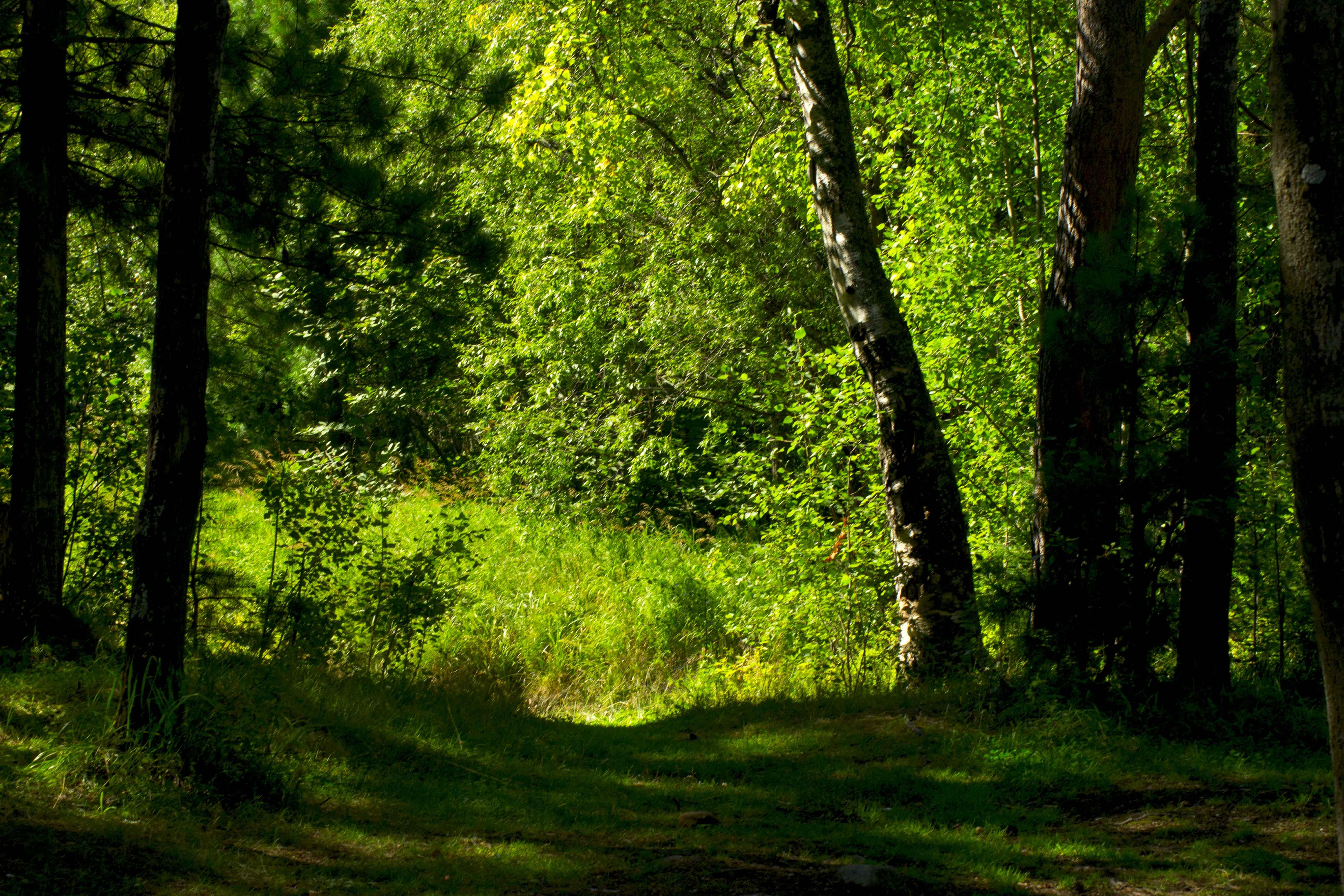 Летний лес