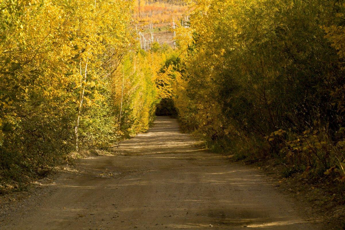 Арка золотого леса