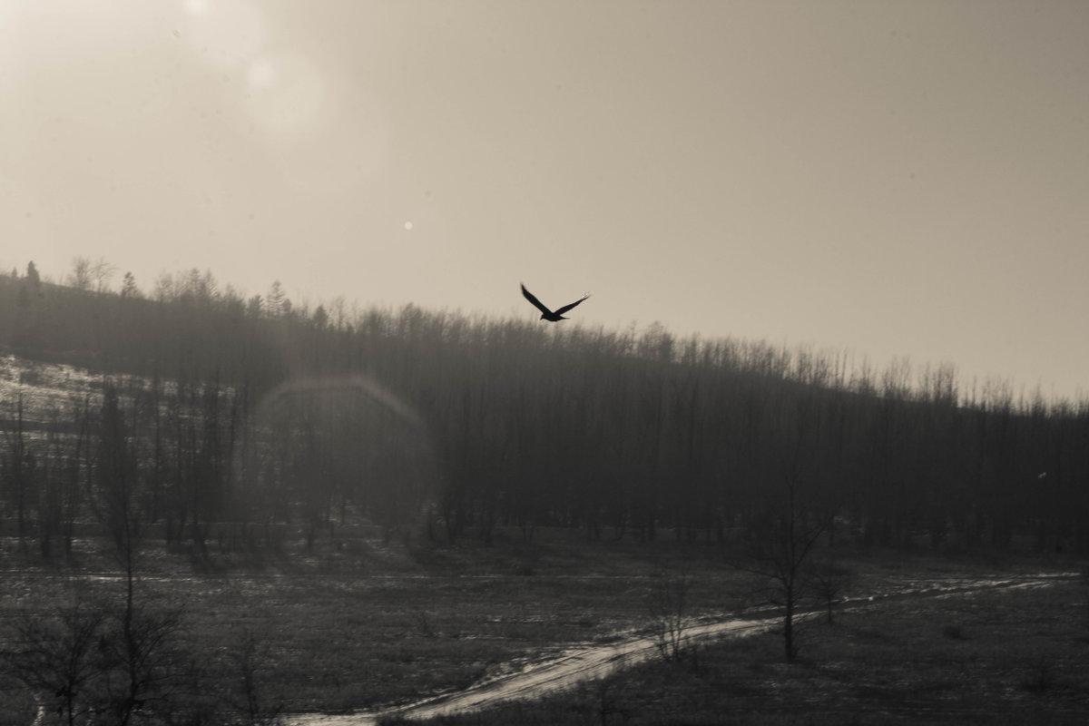 Полёт орла