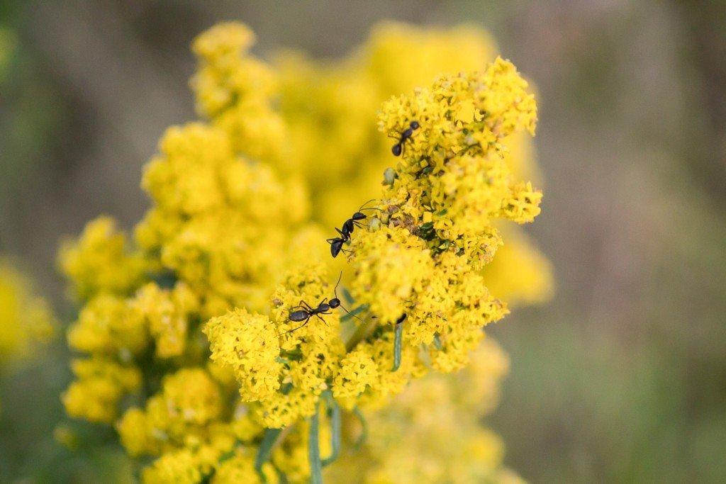 Жизнь муравьёв