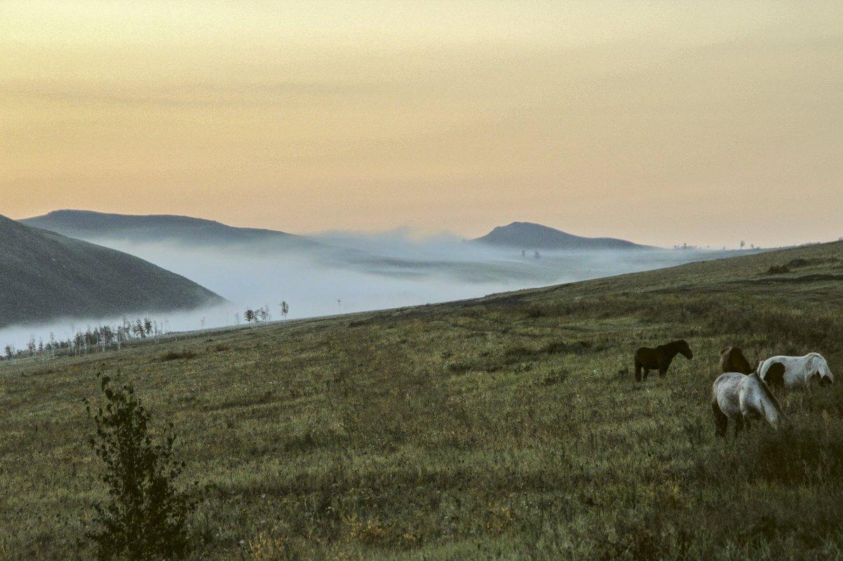 Утро, туман, лошади