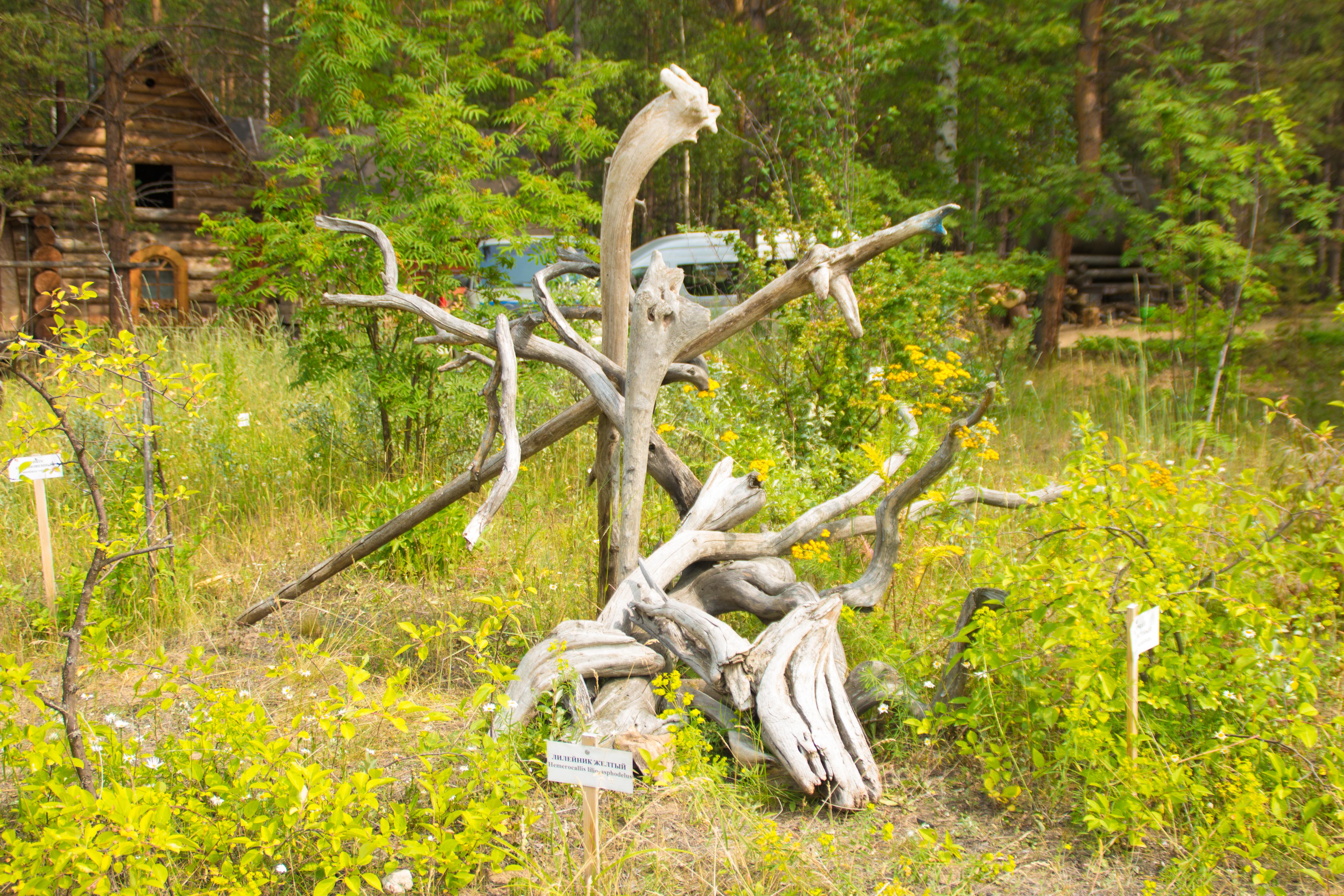 Отполированные водой ветки деревьев. Музей Байкала. Максимиха.